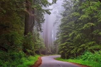 Redwoods NP